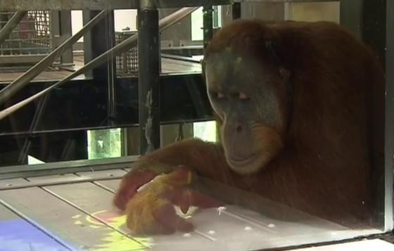 Orangutany zdają się zadowolone z Kinecta