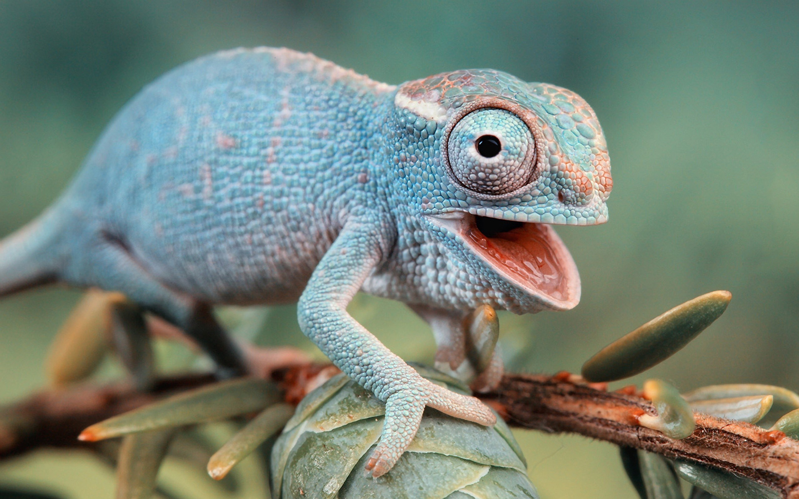 branch-leaves-chameleon-2560x1600